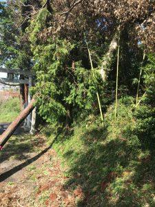 神社の道をふさぐ台風15号による倒木
